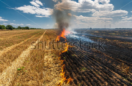 burning field
