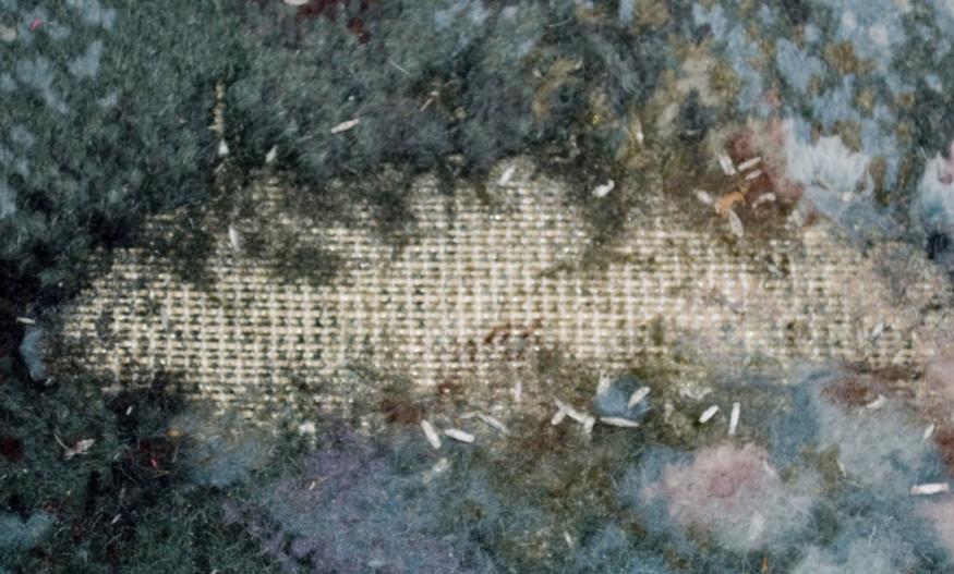 moth eaten clothing